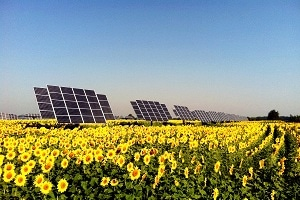 solar panels in sunflowers